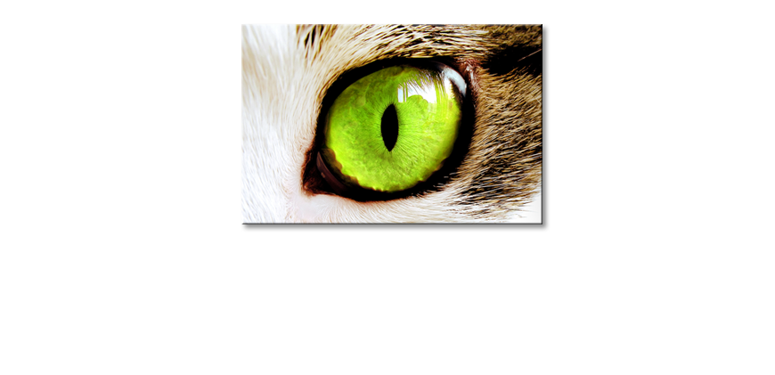 Art-print-Cats-Eye