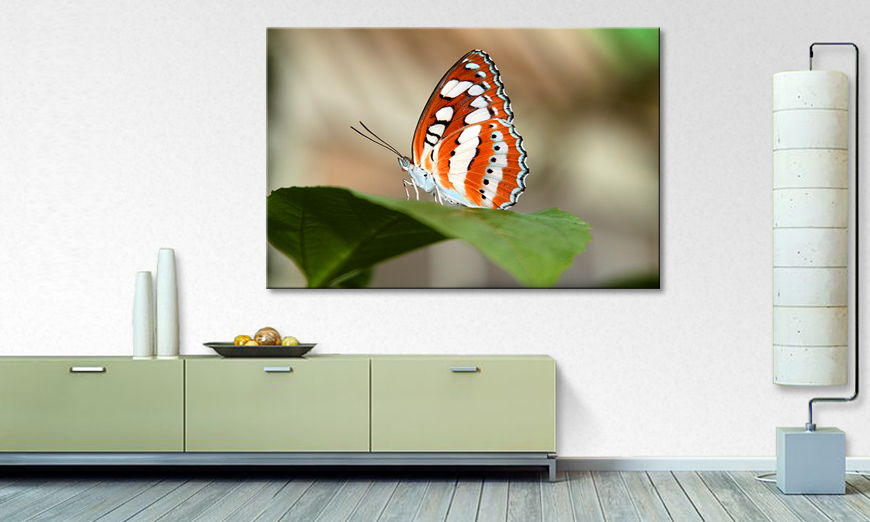 Art print Orange Butterfly