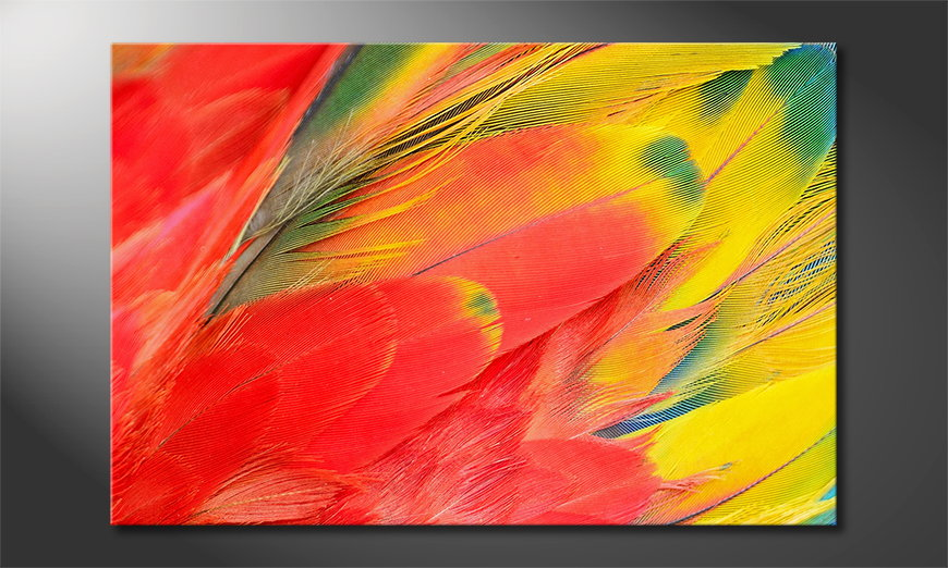 Art print Parrot Feathers