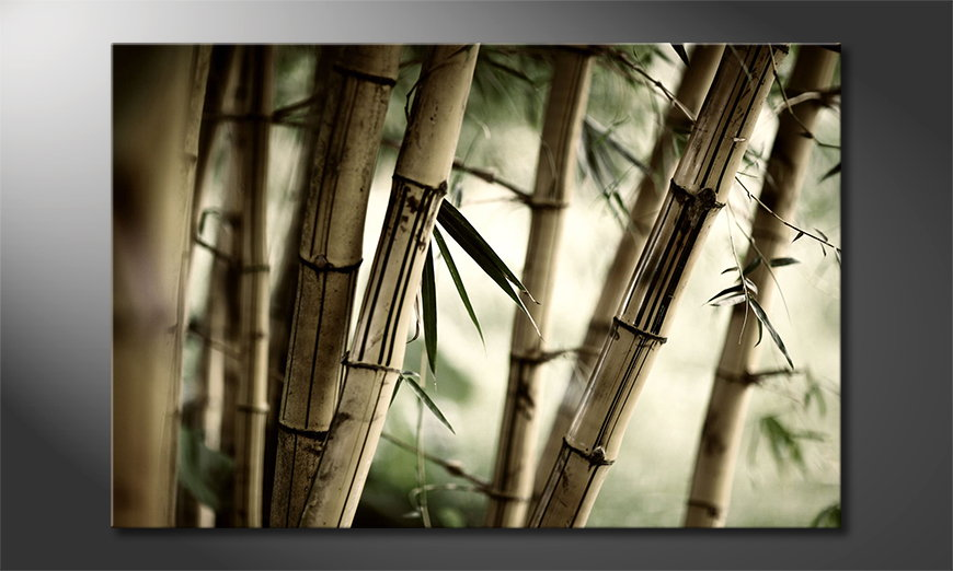 Canvas Bamboo Forest