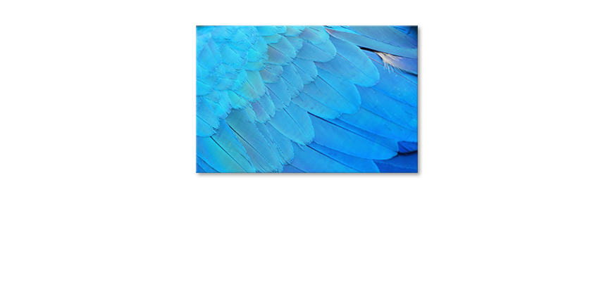 Canvas-Bird-Feathers
