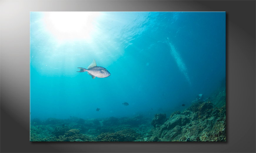Canvas print Colorful Reef