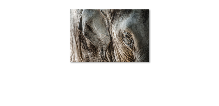 Canvas-print-Eye-of-Elephant