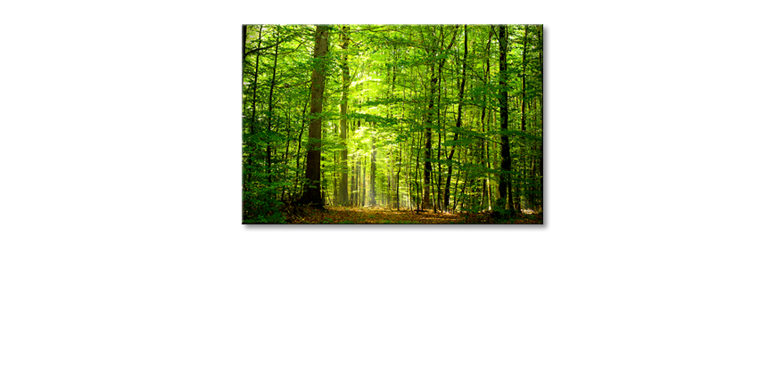 Canvas-print-Into-the-Forest