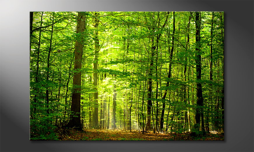 Canvas print Into the Forest