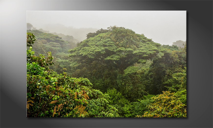 Canvas-print-Jungle