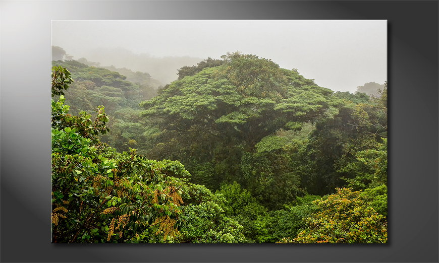 Canvas print Jungle