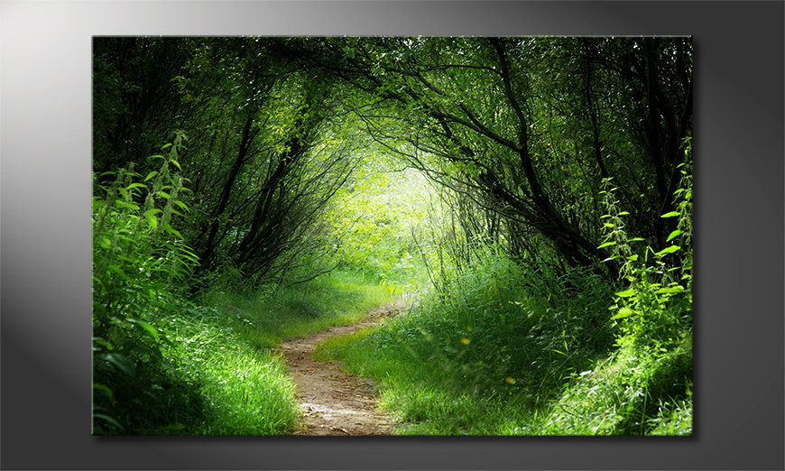Canvas print Way into the Forest
