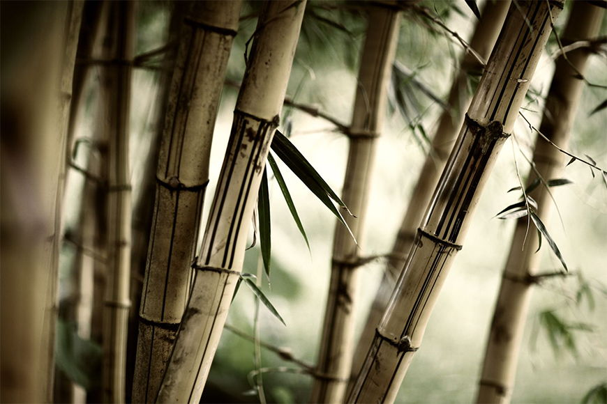 Photo wallpaper Bamboo shaft from 120x80cm