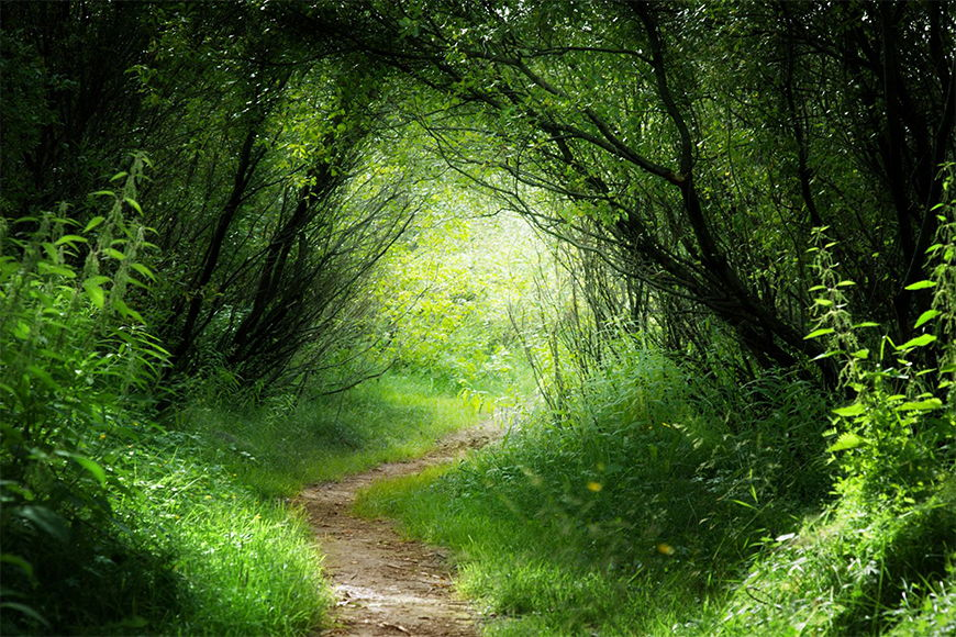 Photo wallpaper Green way from 120x80cm