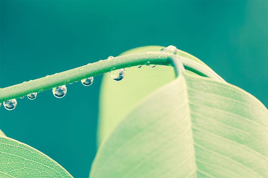 Photo-wallpaper In drops in 6 Größen