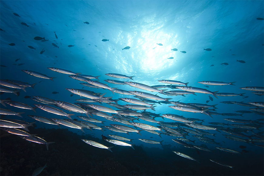 Photo-wallpaper Ocean blue from 120x80cm
