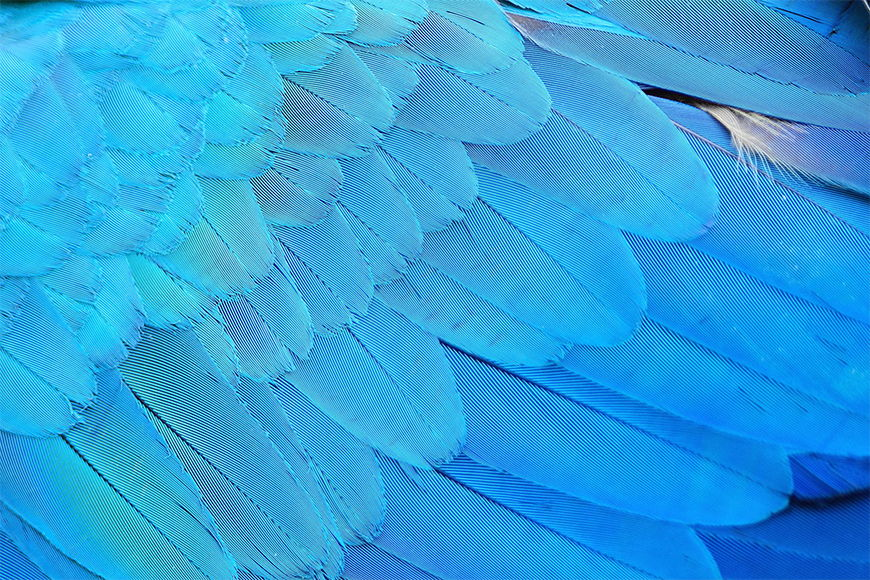 Photo wallpaper Soft feathers from 120x80cm