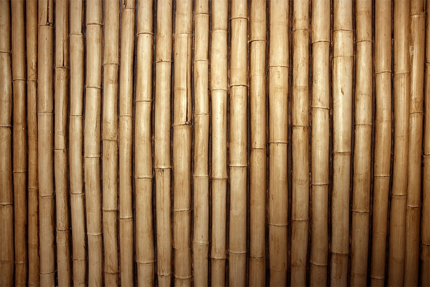 Wallpaper Bamboo from 120x80cm
