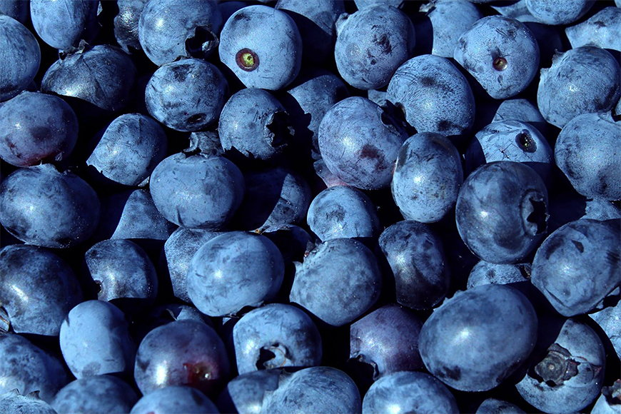 Wallpaper Blueberry from 120x80cm